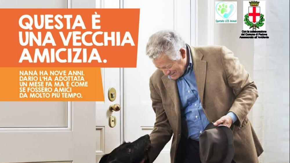 Adozione cani e gatti adulti, la campagna della Lav e del comune di … – PadovaOggi